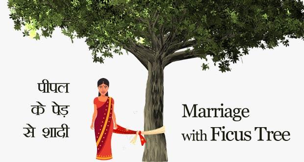Marriage with ficus tree in astrology - पीपल के वृक्ष से विवाह